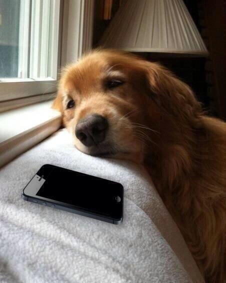 1. Quando você vai ansioso ver o WhatsApp e não tem mensagem da pessoa de quem você gosta.